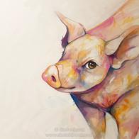 Vegan Society Pig.jpg