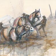 Horses in mud.jpg