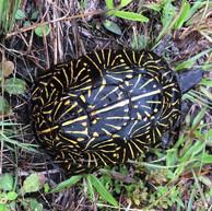 Hike North Port turtle .jpeg
