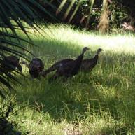 Myakkahatchee Creek Environmental Park