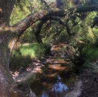 hike north port myakkahatchee creek envi
