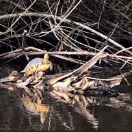 Turtle North Port Blueways kayak canal .