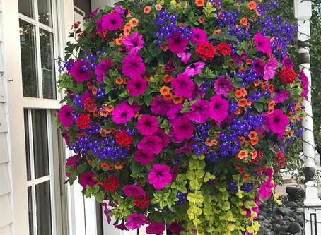 Why Flower Essences?
