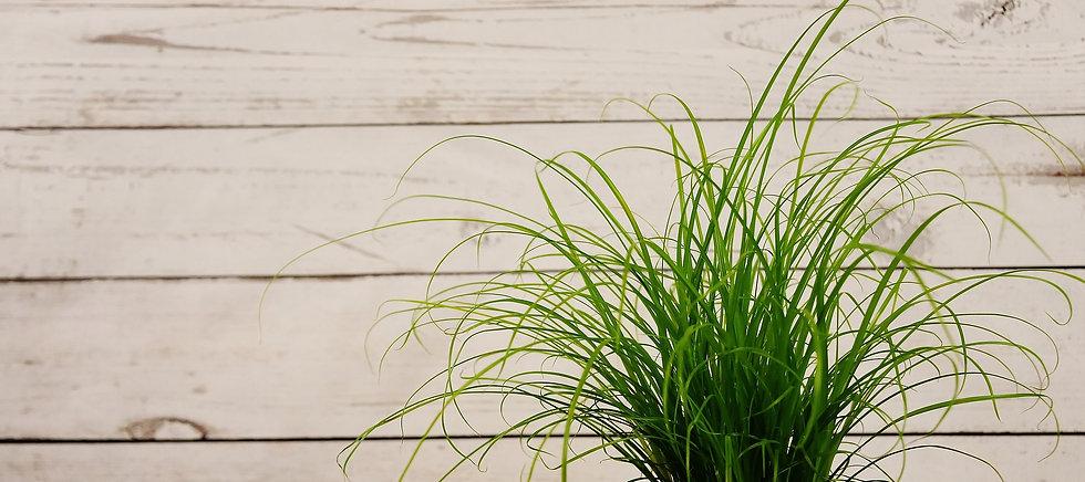 grass-2031668_1920.jpg