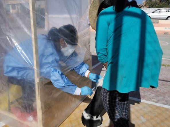 Con cabinas especiales  Arequipa retoma vacunación antirrábica canina