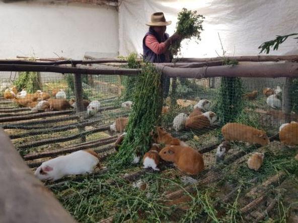 Más de 12 mil familias rurales mejoraron sus ingresos en La Libertad