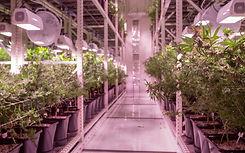 Indoor Grow 4.jpg