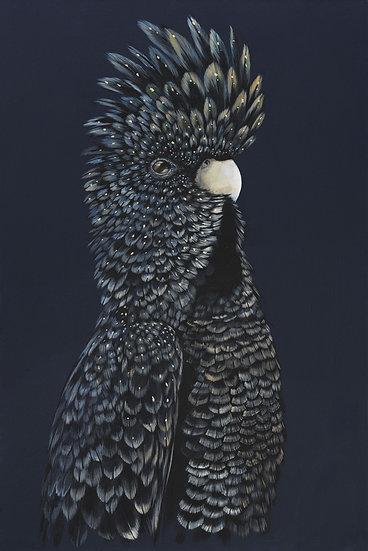 Izzy The Red Tailed Black Cockatoo Original Artwork