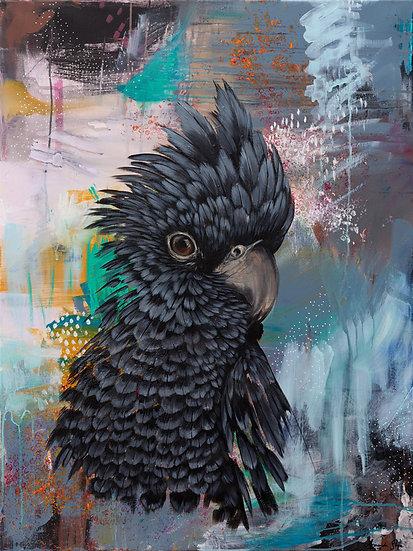 Gavin the Glossy  Black Cockatoo