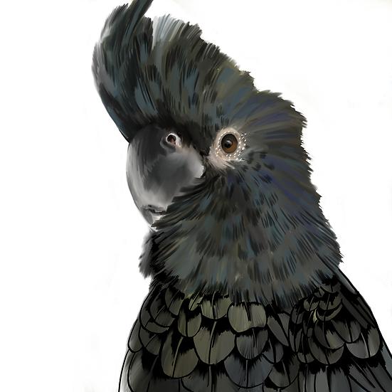 Benny the Black Cockatoo