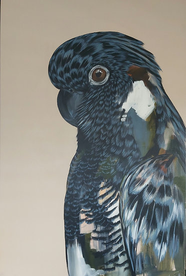Romeo the Black Cockatoo