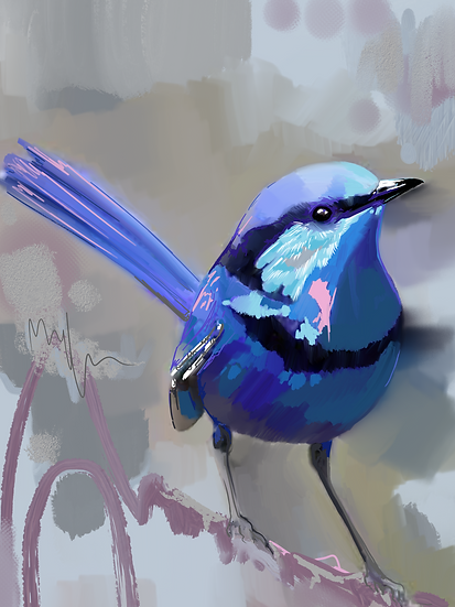 Frankie the Fairy Wren