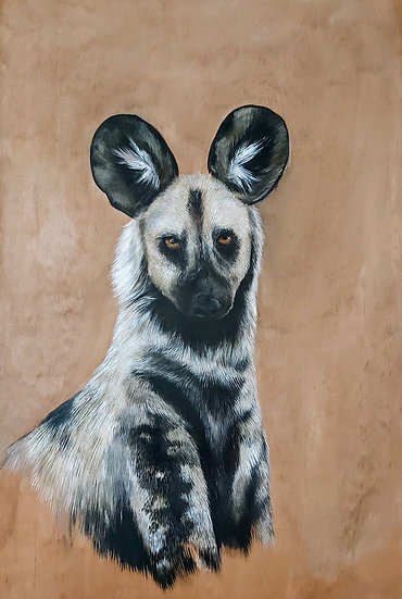 Amahle - African Painted Dog