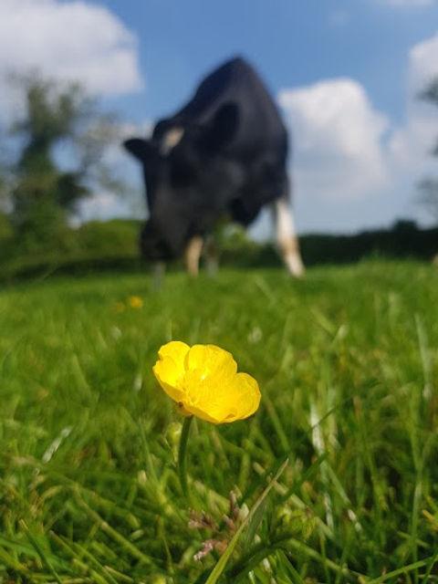 ethical carbon neutral milk