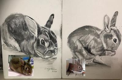 Bunny Rabbits - pencil on canvas