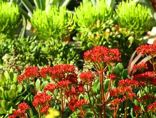 Layering Your Flower Garden