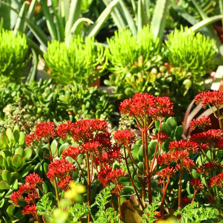 Observa cada día tu jardín, y te darás cuenta de cuanto lo has cuidado