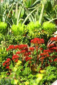 weelderige planten