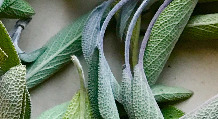 Salvia (Sage), sore throats and why oral hygene matters.