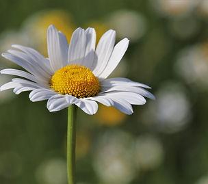 wildflowers-4209291_1920.jpg