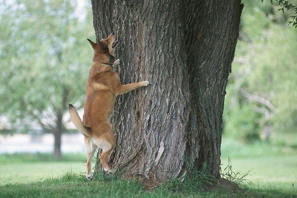 obsessive-behavior-in-dogs.jpg