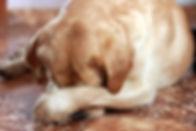 dog-disobedient-wont-listen.jpg