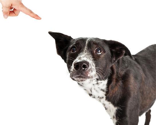 problem-dog-simple-solutions.jpg