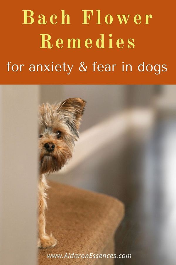 bach-flower-remedies-fear-anxiety-in-dog
