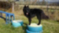 confidence-course-dogs.jpg