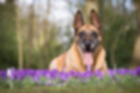 flower-essences-senior-old-dogs.jpg