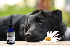 Flower Essences for Dogs - articles, information