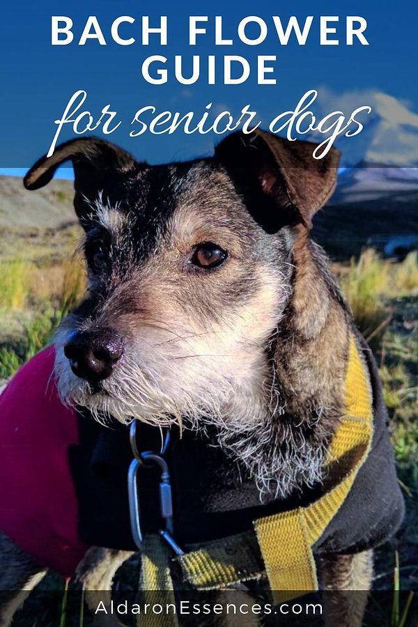 bach-flower-remedy-senior-old-dogs (3).j