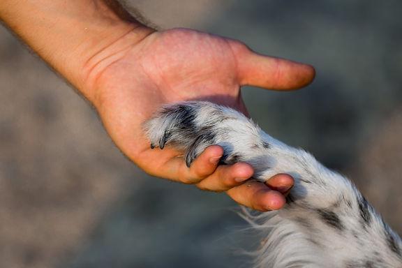 setback-dog-training-behavior-article.jp