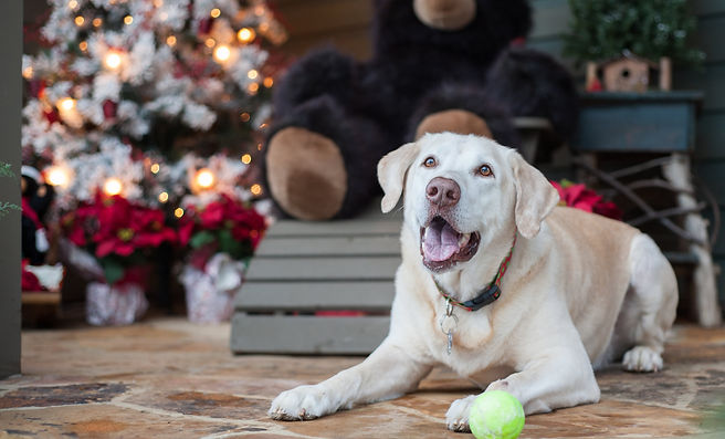 Simple tips for reducing your dog's stress during the holdays
