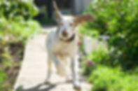 panic-escape-in-dogs-flower-essences.jpg
