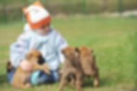 puppy-socialization-bach-flowers.jpg