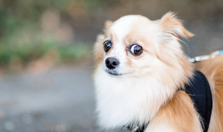 shy-timid-nervous-dog-remedy.jpg