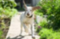 panic-escape-in-dogs-aldaron-flower-esse