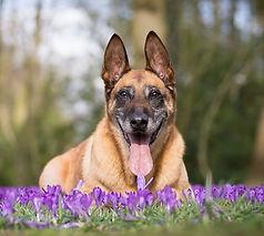 Senior-Dogs-Category.jpg