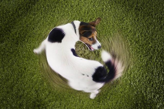 hyper-high-strung-dog-calming-remedy.jpg
