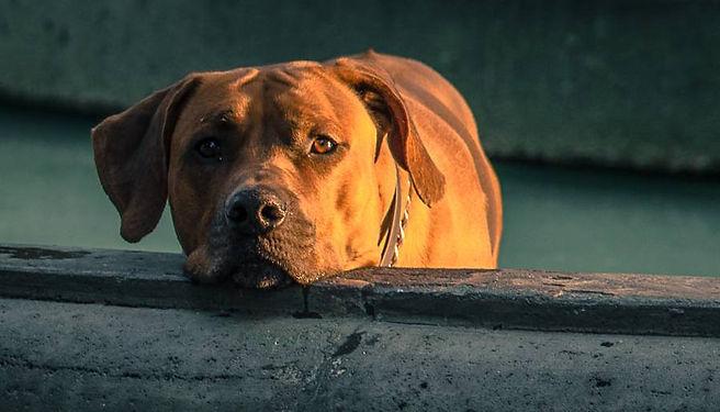 dog-training-setbacks-tips.jpg
