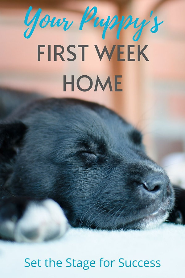 puppy's first week home v2.jpg