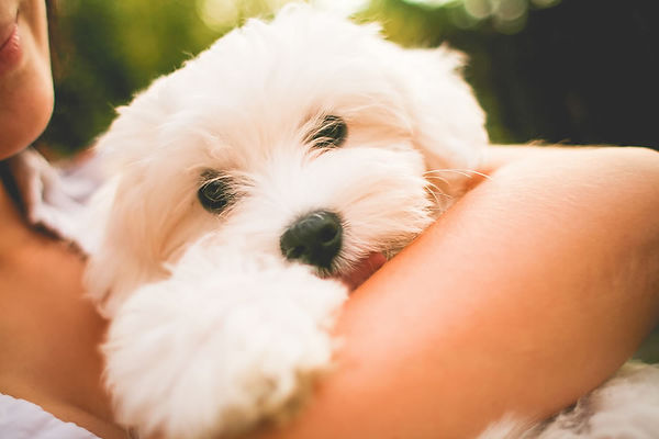 needy-clingy-dog-flower-essences.jpg