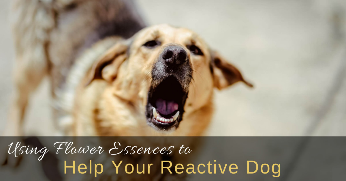 Bach Flower Essences To Help Reactive Dogs