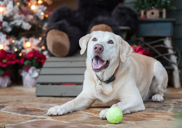 holiday-stress-prevention-tips-dogs.jpg
