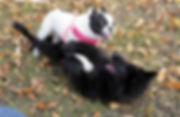 New-Puppy-FAQ-1.jpg