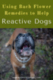 bach-flower-remedies-for-reactive-dogs (