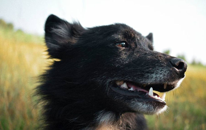 calm-relaxed-happy-dog.jpg