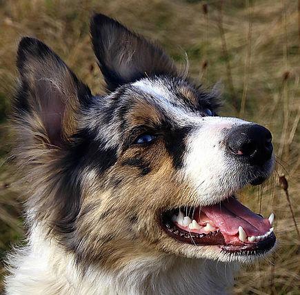 active-appreciation-dogs.jpg
