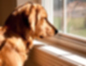 separation-anxiety-dogs-remedies.jpg